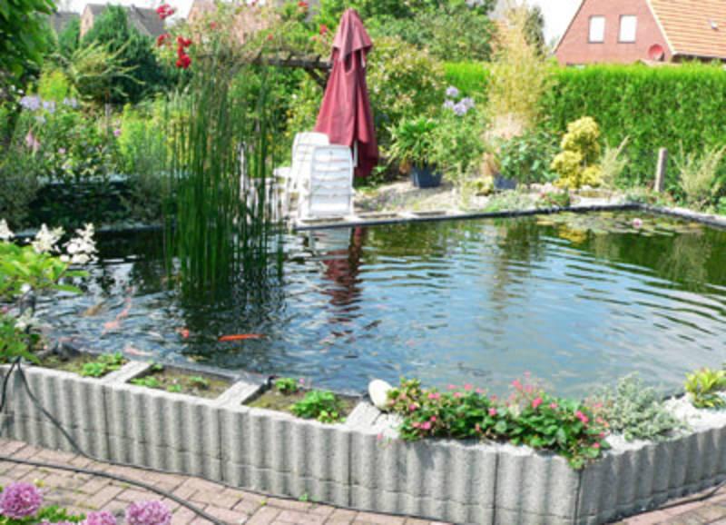 Fotogalerie oase for Graskarpfen im koiteich