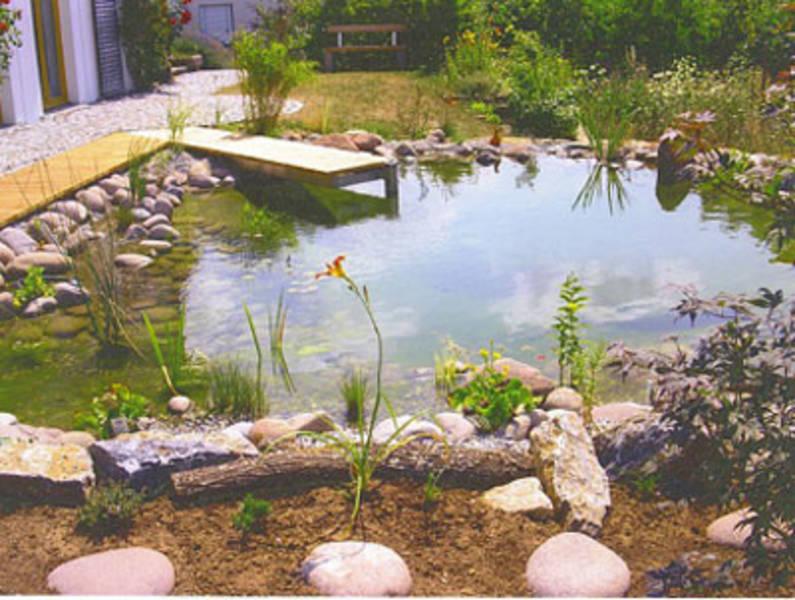 Fotogalerie oase for Graskarpfen teich