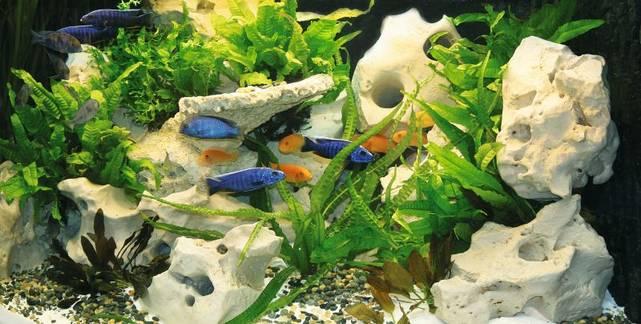 Aufbau Aquarium Oase