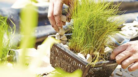 Paniers pour plantes en mati re synth tique oase for Toile pour bassin prix