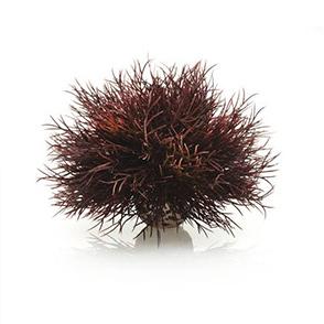 biOrb Aquarium zeelelie donkerrood